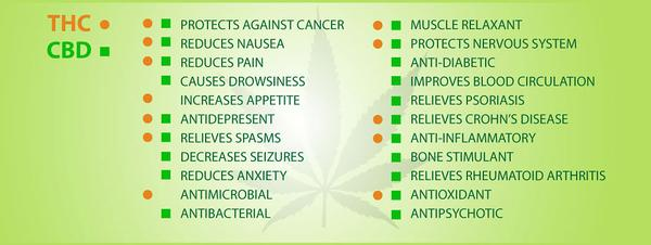 Cbd Benefits Are Real Because Does Produce Strong Medicinal And Therapeutic Effects For Even The Most Common Conditions