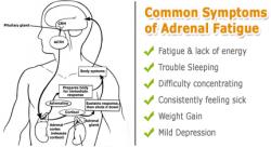 adrenal stress test
